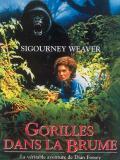 Affiche de Gorilles dans la brume